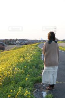 菜の花と女の子の写真・画像素材[4313996]