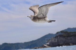 海の上を飛び回るウミネコの写真・画像素材[4370592]