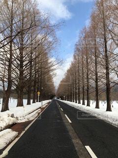 風景,空,冬,雪,屋外,雪景色,樹木,道