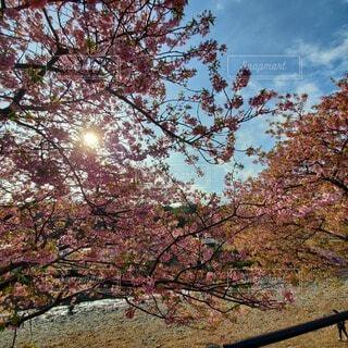 空,花,秋,桜,屋外,葉,樹木,草木