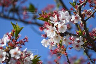 花,春,屋外,樹木,草木,ブルーム,ブロッサム