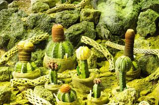 自然,緑,サボテン,多肉植物,草木,ナデシコ目
