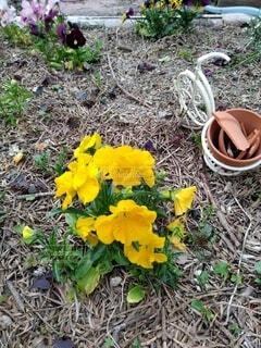 花,屋外,草,地面,ガーデン