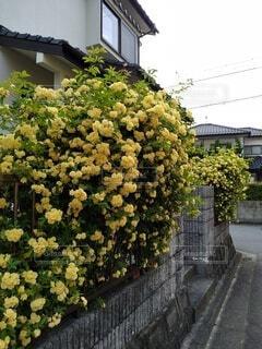 花,屋外,草木,ガーデン