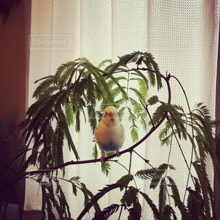 花,動物,鳥,屋内,窓,草木