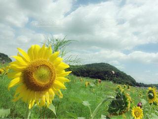 花のクローズアップの写真・画像素材[4317429]