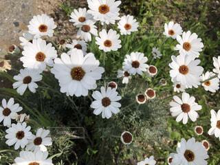 花,屋外,散歩,白色,草木,日中