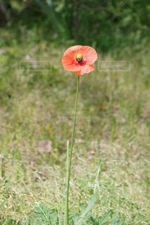 オレンジの花の写真・画像素材[4339563]
