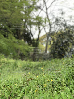 自然,花,屋外,景色,草,樹木