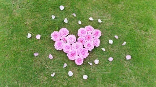 芝生の上、ハート型に並べた薔薇の花 (横長版)の写真・画像素材[4392878]