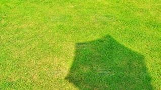 芝生と日傘の影の写真・画像素材[4408464]