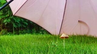 雨傘と天然傘の写真・画像素材[4601159]