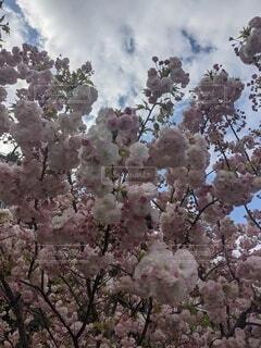 花,春,屋外,樹木,草木,ブロッサム