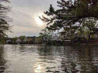 自然,風景,空,屋外,川,水面,池,樹木