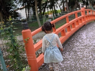 風景,桜,屋外,オレンジ,樹木,人物,人