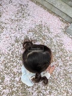 犬,桜,子供,幼児,桜道