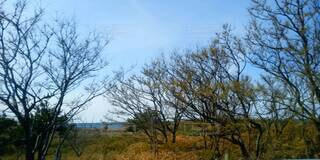 自然,風景,海,空,秋,森林,屋外,雲,枯れ木,樹木,草木,インスタ映え