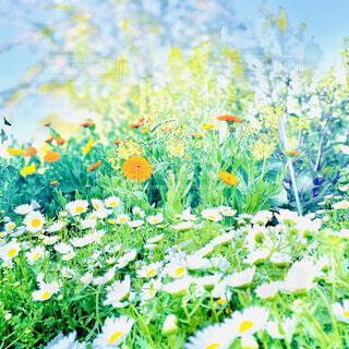 色々な花の写真・画像素材[4333945]