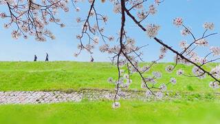 桜と堤防と人の写真・画像素材[4366127]
