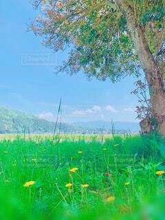 自然,風景,空,花,春,木,屋外,緑,草原,雲,晴天,山,景色,草,樹木,野原,田園,たんぽぽ,黄,草木
