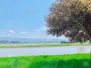 自然,風景,空,花,春,屋外,湖,緑,草原,雲,晴天,水面,山,景色,草,樹木,野原,田園,たんぽぽ,黄,草木