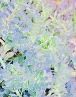 花,屋外,緑,かわいい,きれい,葉,ガーデニング,絵画,園芸,サボテン,多肉植物,草木,ガーデン