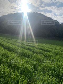 畑のある暮らしの写真・画像素材[4318752]