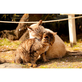 猫,自然,動物,屋外,景色,仲良し,野良猫,地面,ネコ科