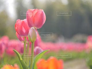 春の写真・画像素材[2012260]