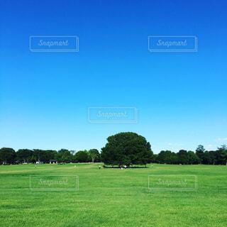 自然,風景,空,夏,屋外,緑,雲,景色,草,樹木,ファーム,田園地帯,エモい