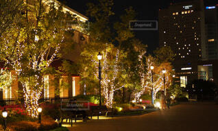 夜,屋外,家,樹木,照明,夜道,明るい,街路灯