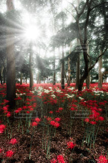 花,屋外,赤,樹木,草木