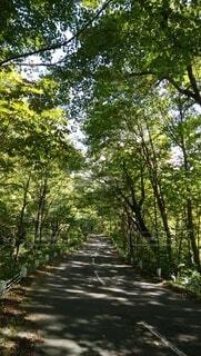 自然,空,木,屋外,森,緑,道路,山,木漏れ日,樹木,道,トンネル,グリーン,森林浴,空気,山林,草木,ブナ,晩秋,澄んだ,ナラ,追い越し車線,楢