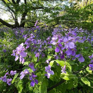 花,屋外,紫,樹木,草木,ガーデン,フローラ