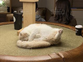 猫,動物,屋内,可愛い,股,解禁,開脚