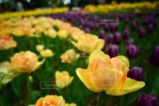 自然,風景,花,春,花畑,フラワー,季節,景色,草木,フローラ