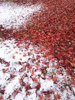 花,秋,雪,葉,落ち葉,コントラスト