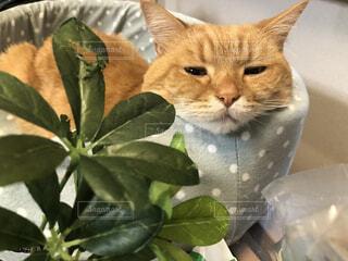 猫,動物,草木