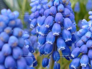 花,青,癒し,あぜ道,休日,お休み,草木,ガーデン