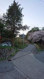 自然,空,春,屋外,ピンク,車,道路,夕方,家,樹木,道,地面,草木,車両,ブロッサム,舗装