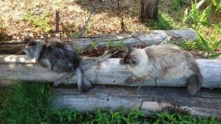 猫,屋外,親子,好き,丸太