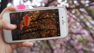 空,花,春,桜,屋外,青い空,桜並木,樹木,草木,春の空,桜の花,さくら,ブロッサム,桜日和