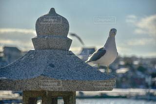 鳥,屋外,立つ,青森,ウミネコ,手すり,蕪嶋神社