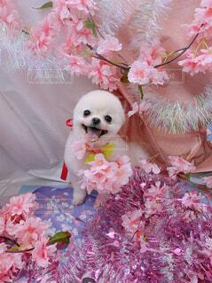 花,ピンク,人形,クマ