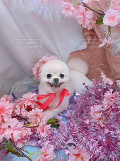 犬,花,動物,屋内,ピンク,人形