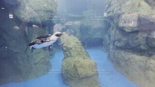 湖,かわいい,水族館,水面,葉,山,ペンギン,オシャレ,可愛い,洞窟,お洒落,おしゃれ