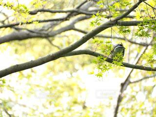 鳥,屋外,晴れ,木漏れ日,樹木,黄緑