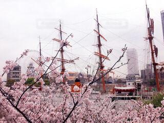 空,春,桜,屋外,船,横浜,みなとみらい