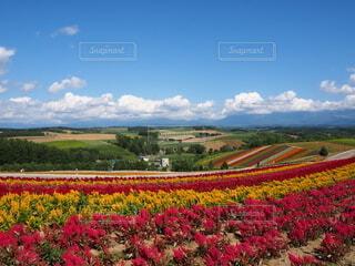自然,風景,空,花,屋外,雲,田舎,景色,草,草木,美瑛