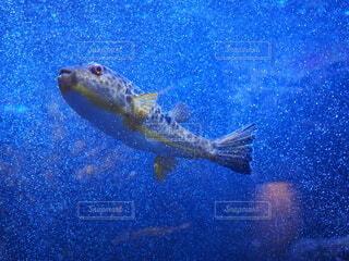 海,動物,魚,青,水族館,水面,葉,泳ぐ,水中,生物,フグ